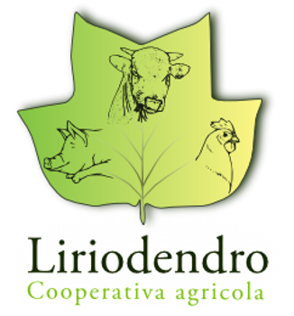 Immagine per il produttore LIRIODENDRO